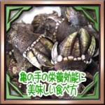 亀の手の栄養効能にフジツボの違い!美味しい食べ方にレシピ!
