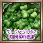 グリーンナッツオイルの美肌便秘解消効果!亜麻仁油との違いに使い方